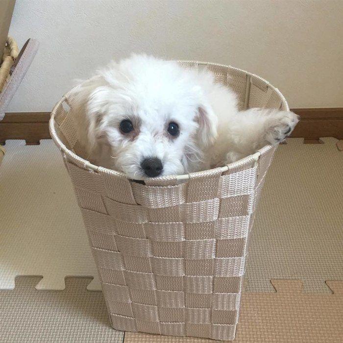 むうちゃん、ゴミ箱からこんにちは♡