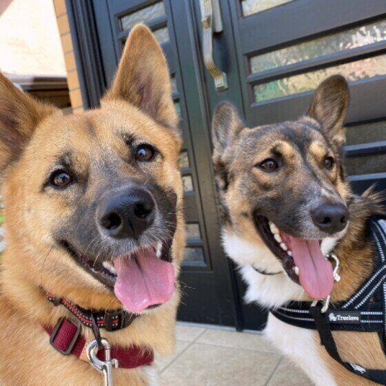 自宅で行う犬の歯石取りは危険?スケーラーで出血や骨折も! いぬのきもち