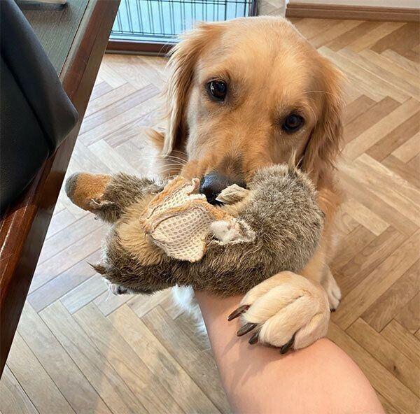 おもちゃで遊ぶこはるちゃん