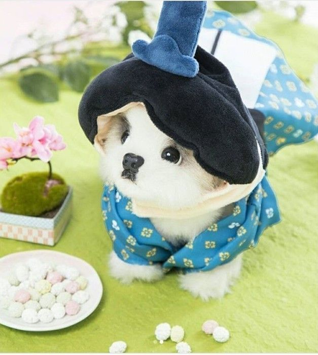 3coinsの犬用ひな祭りアイテムお内裏様