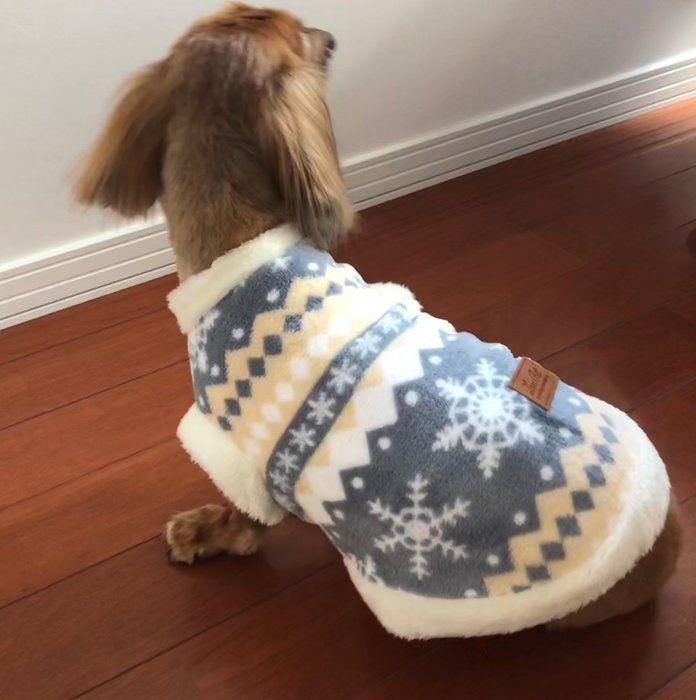 服を着た愛犬