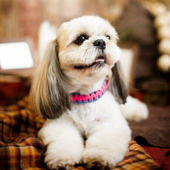 怖がりの犬ってどんな犬?怖がりの愛犬と暮らす注意点