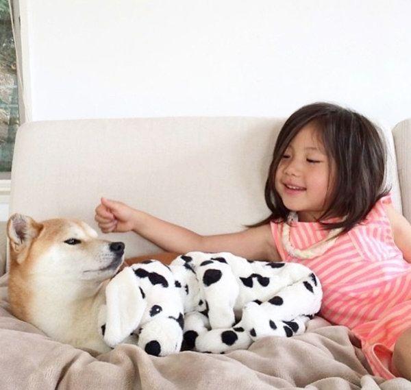 子どもとまったりする柴犬のリリコちゃん