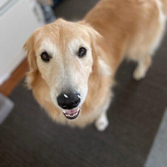 シニア犬になると「食べ物を飲み込みにくくなる」3つの理由と対処法とは