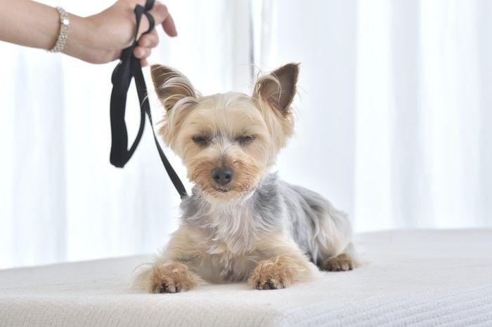 犬のストレスと異常行動