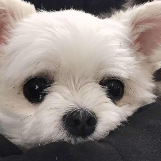 ミックス犬