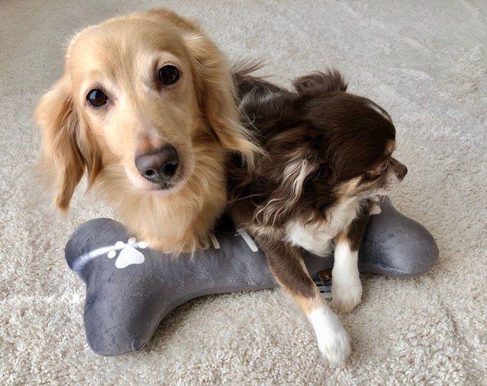 ペット用クッションにのる犬たち