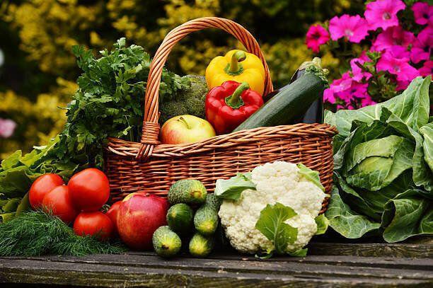 新鮮なオーガニック野菜のガーデン